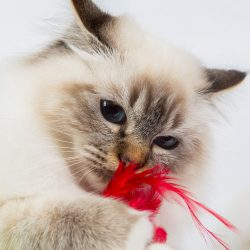 All 5 Feline Prophylactics 2