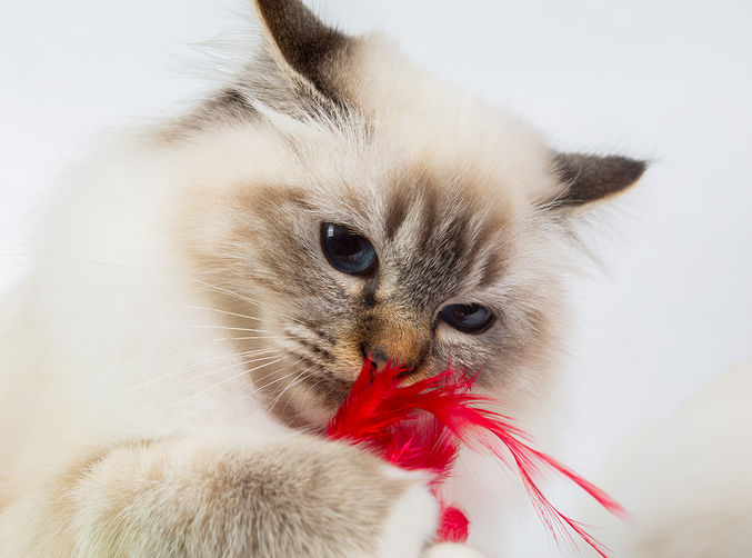 All 5 Feline Prophylactics