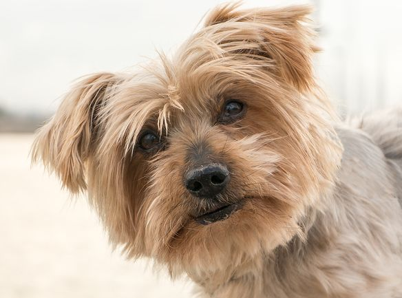 Home Remedies For Dogs With Epilepsy