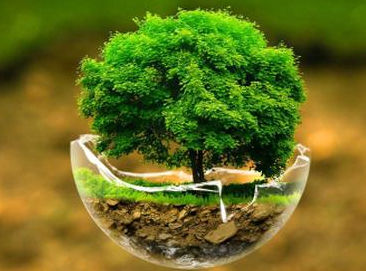 Agrohomeopathy for Your Plants 4