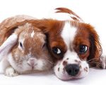 Homeopathy for Pets? 9