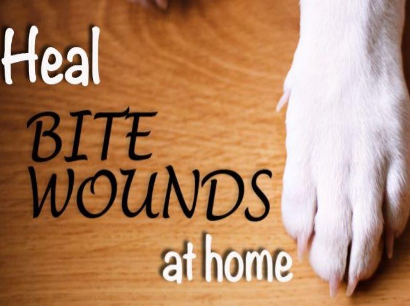 Homeopathy for Animal Bites 1