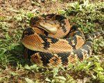 Part 2: Snake-kingdom 1