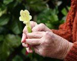 Remedies for the Symptoms of Rheumatoid Arthritis 5