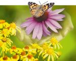 Healing Plants with Homeopathy 3