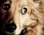 Remedies for Frightened Pets 3