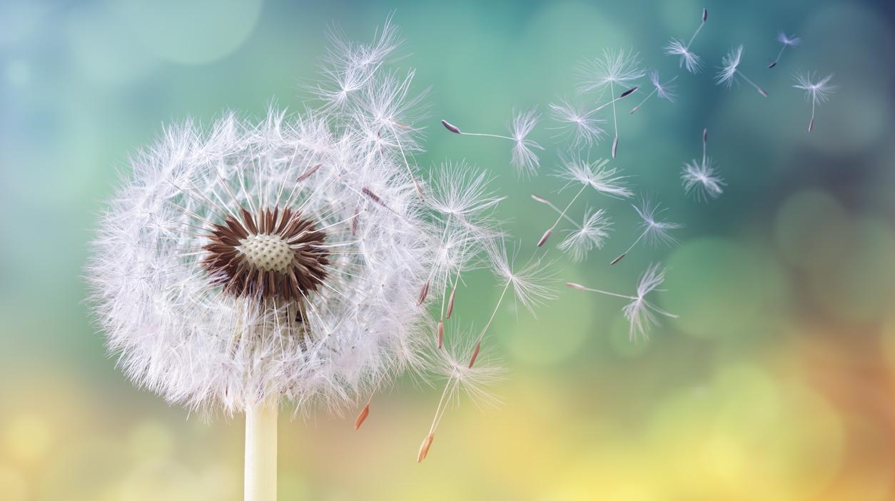 Study: Allergies Improve 1