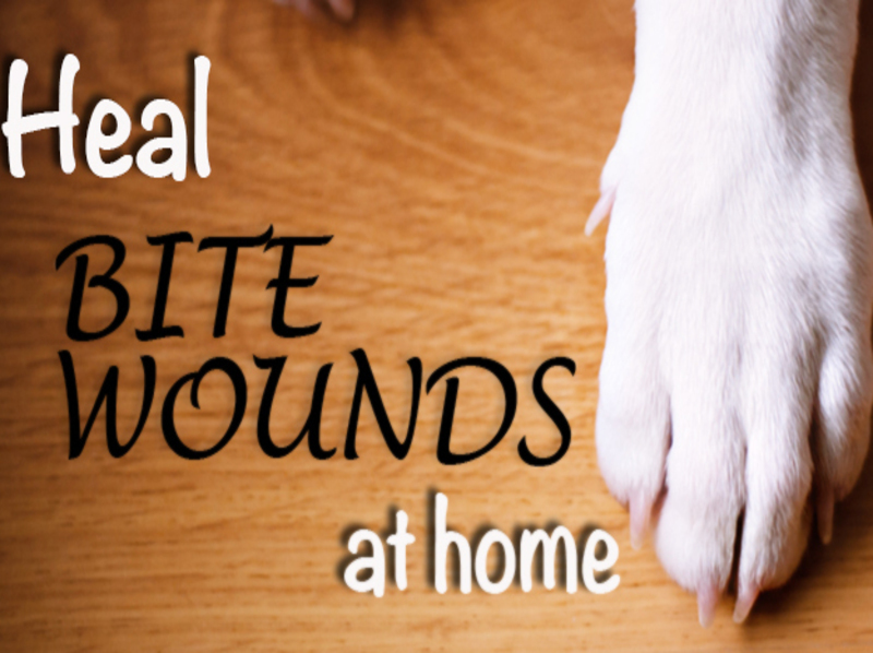Remedies for Animal Bites 4