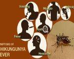 Chikungunya Fever Remedies 9