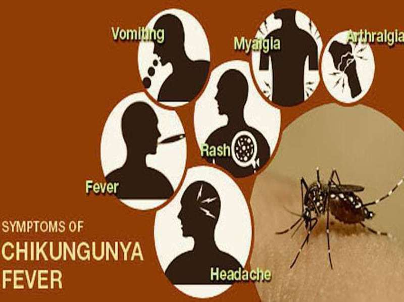 Chikungunya Fever Remedies 4