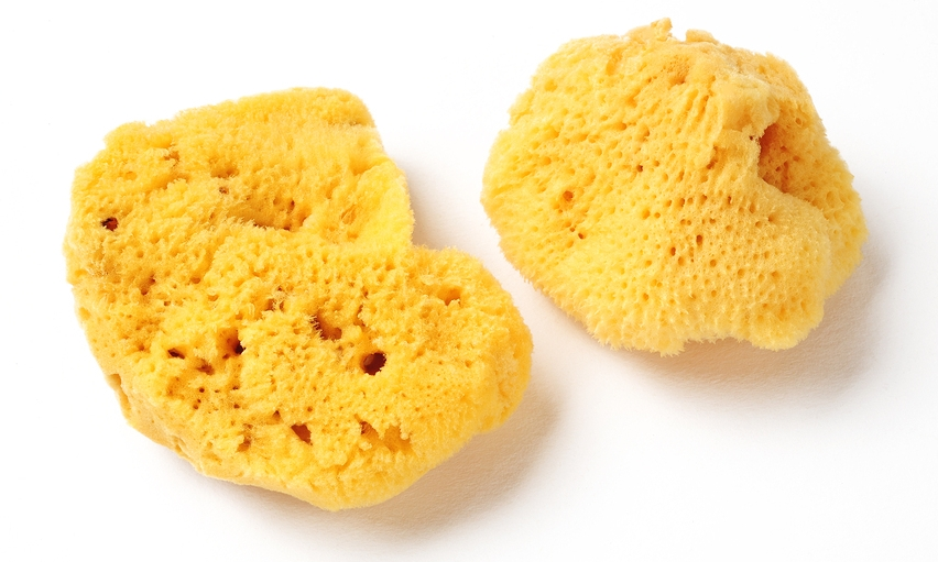 Know Your Remedies: Spongia Tosta (Spong.) 1
