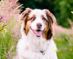 Aussie Pets and Natural Care 7