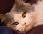 Homeopathy for Feline Hyperthyroidism 2