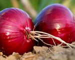 Merlin and the Red Onion - Homeopathy for Hay Fever 6