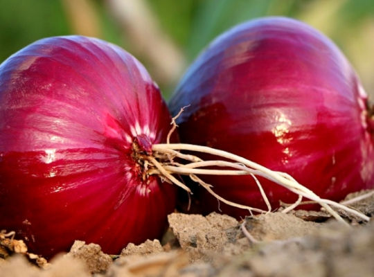 Merlin and the Red Onion - Homeopathy for Hay Fever 1