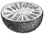 Boericke on Nux Vomica (Nux-v.) 19